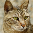 Cat in close-up. — Stock Photo #5961580