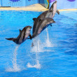 Dolphins jumping high from blue water - Stock Photo