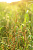 Summer grasses under sunshine — Stock Photo
