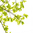 Green leaves background — Stock Photo #6289260