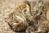 A curious cat close-up. — Stock Photo
