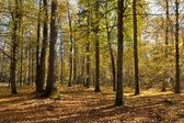 Autumnal mixed forest with dry leaves — Stock Photo