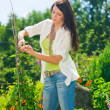 Stock Photo: Summer gardening young beautiful woman cut flower