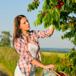 Cherry tree harvest summer woman sunny countryside — Stock Photo #6441294