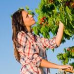 Cherry tree harvest summer beautiful woman sunny — Stock Photo #6441306