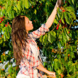 Cherry tree harvest summer woman stand ladder — Stock Photo