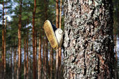 Children's boot on tree in the wood — Foto Stock
