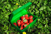 Fresh strawberries in the green box — Stock Photo