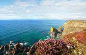 Landscape Cornwall sea cliffs heather — Stock Photo