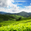 Teplantation Cameron highlands, Malaysia — Stock Photo #5432462