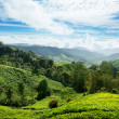 Stock Photo: Teplantation Cameron highlands, Malaysia