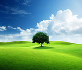 One tree and perfect grass field — Stock Photo