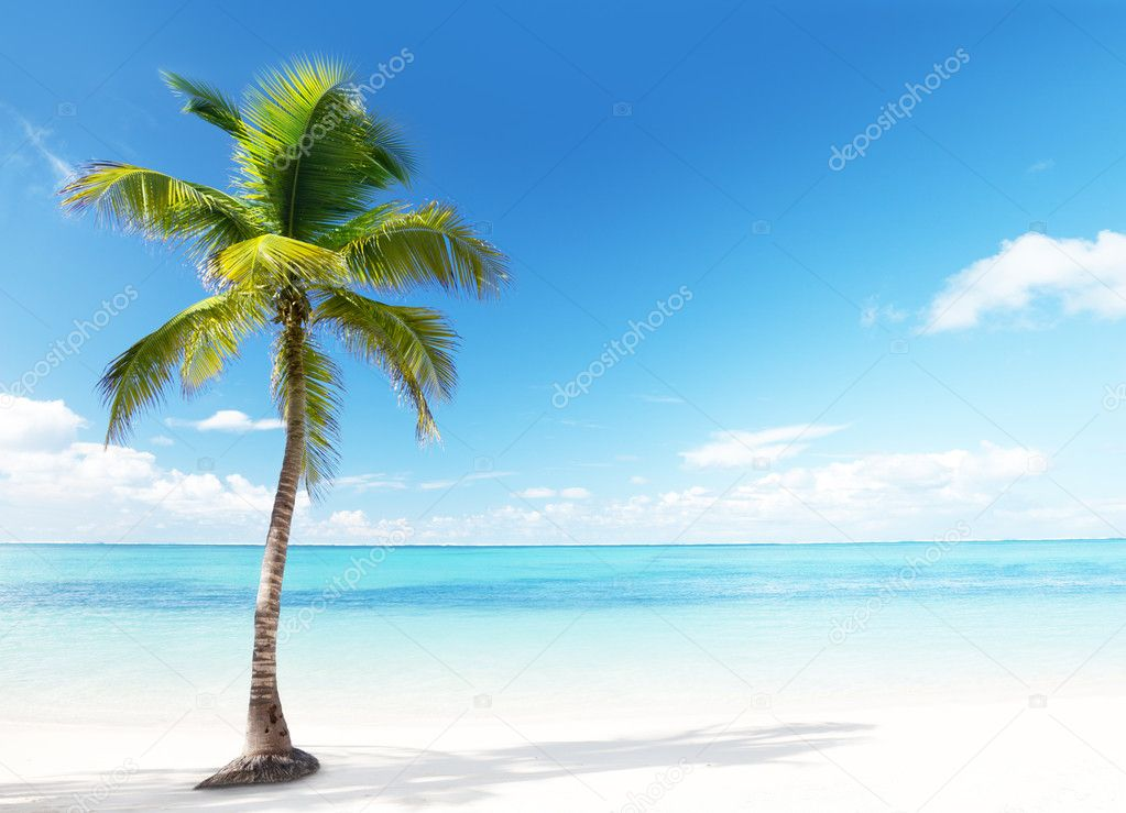 Palm and beach — Stock Photo #5562964