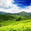 Teplantation Cameron highlands, Malaysia — Stock Photo #5662299