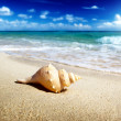 Seashell on the beach (shallow DOF) - Photo
