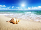 Seashell on the beach — Stock Photo