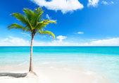 Palm on island — Stock Photo