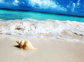 Seashell on the beach (shallow DOF) — Stockfoto