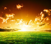 Spring field of grass and sunset — Stock Photo