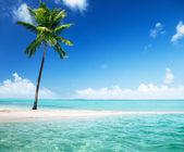 Palm op eiland — Stok fotoğraf