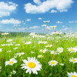 Field of summer flowers — Stockfoto