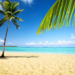 Sea and coconut palm — Foto Stock