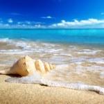 Seashell on the beach (shallow DOF) — Stock Photo #6450726