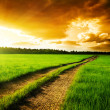 Stock Photo: Ground road and sunset