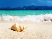 Seashell on the beach (shallow DOF) — Stock Photo