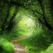 Foto Stock: Way in deep forest