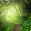 Way in deep forest — Stock Photo #6583757