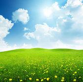 поле весенних цветов — Стоковое фото