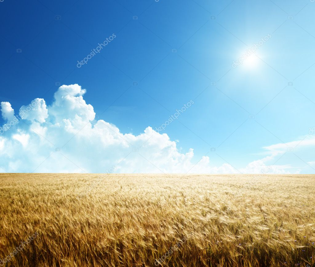 Field of barley and sunny day — Stock Photo #6583743