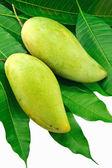 Mango and leaf green — Stock Photo