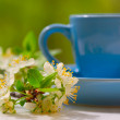 Stock Photo: Cherry flowers and blue cup