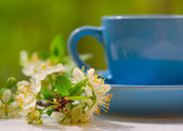 Cherry flowers and the blue cup — Stock Photo