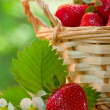 Strawberries in a basket — Stock Photo #6027165