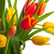 Red and yellow tulips — Stock Photo #6027538