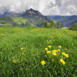 Meadow in the Alps — Foto Stock
