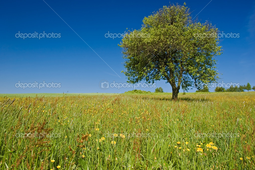 Single Tree in the Meadow with spring flowers — Stock Photo #5439160