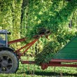 Truck harvesting the Hop — Stock Photo