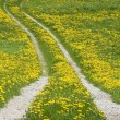 Path through dandelions — Foto Stock