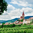 Stock Photo: Village and Vineyard
