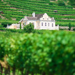 Villa in Vineyard — Stock Photo