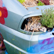 Wrecked Car with Plants — 图库照片