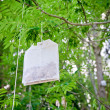Tea Bag on a Tree — Stock Photo