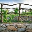 Wooden Grapevine Trellis — Stockfoto
