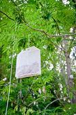 Tea Bag on a Tree — Stock Photo