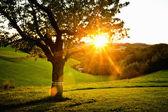 在该国的日落 — 图库照片