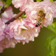 Stock Photo: Bee in flower
